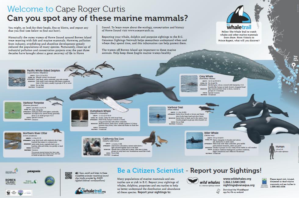 Cape Roger