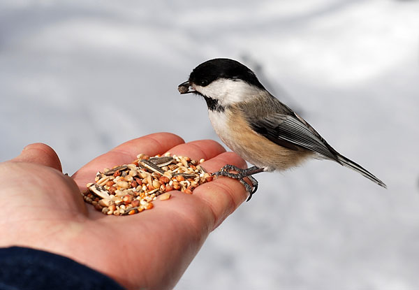 Bird Feeders and Accessories