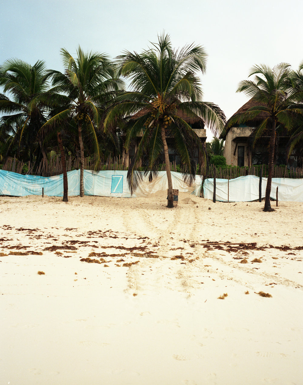 Turtle tracks blocked by development barriers. Tulum, Mexico.