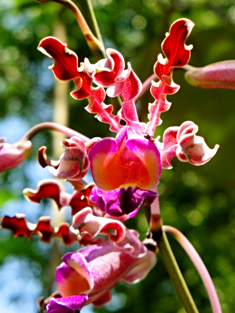 Belize Orchids - Belize Vacation Packages - SabreWing Travel - Photo by David Berg