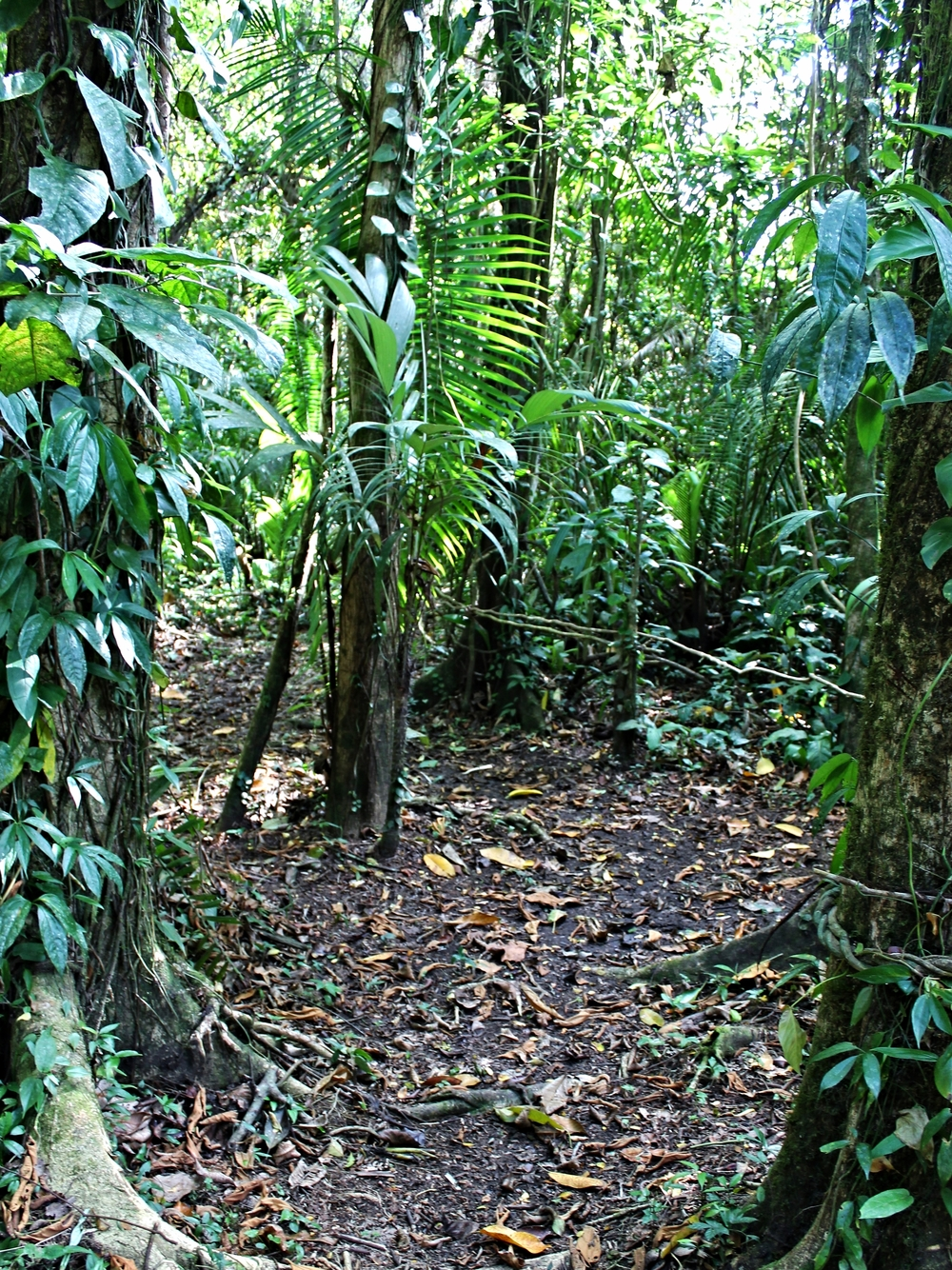 Cockscomb Basin Wildlife Sanctuary - Belize Jungle Vacation - Belize Vacation Packages - SabreWing Travel - Rainforest