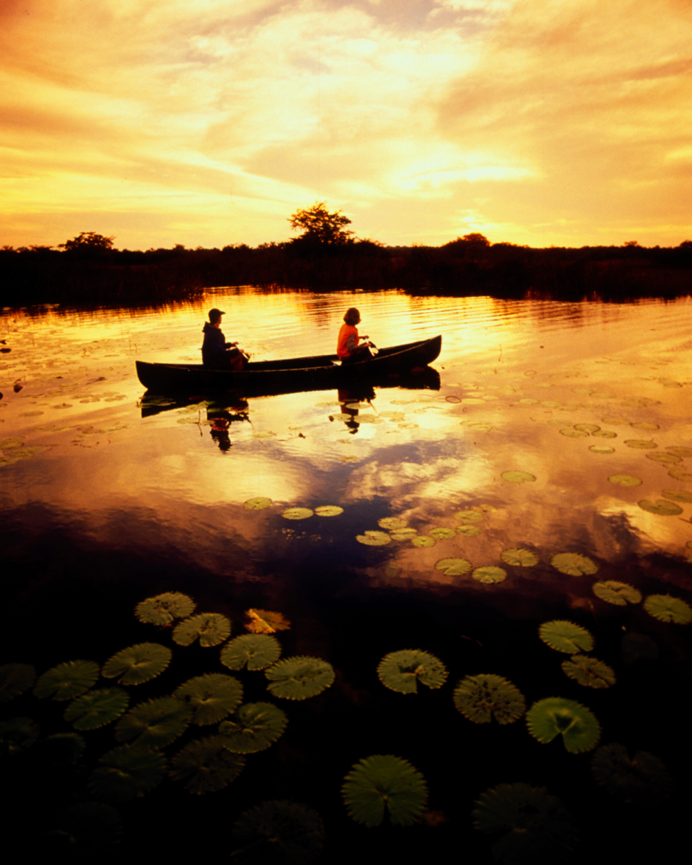 Northern Belize's diverse wetlands are home to an array of spectacular wildlife, Photo: Lamanai Outpost lodge