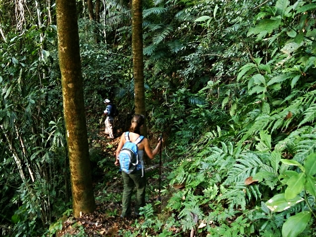 Guided hikes at the Jungle Lodges bring you up-close to nature