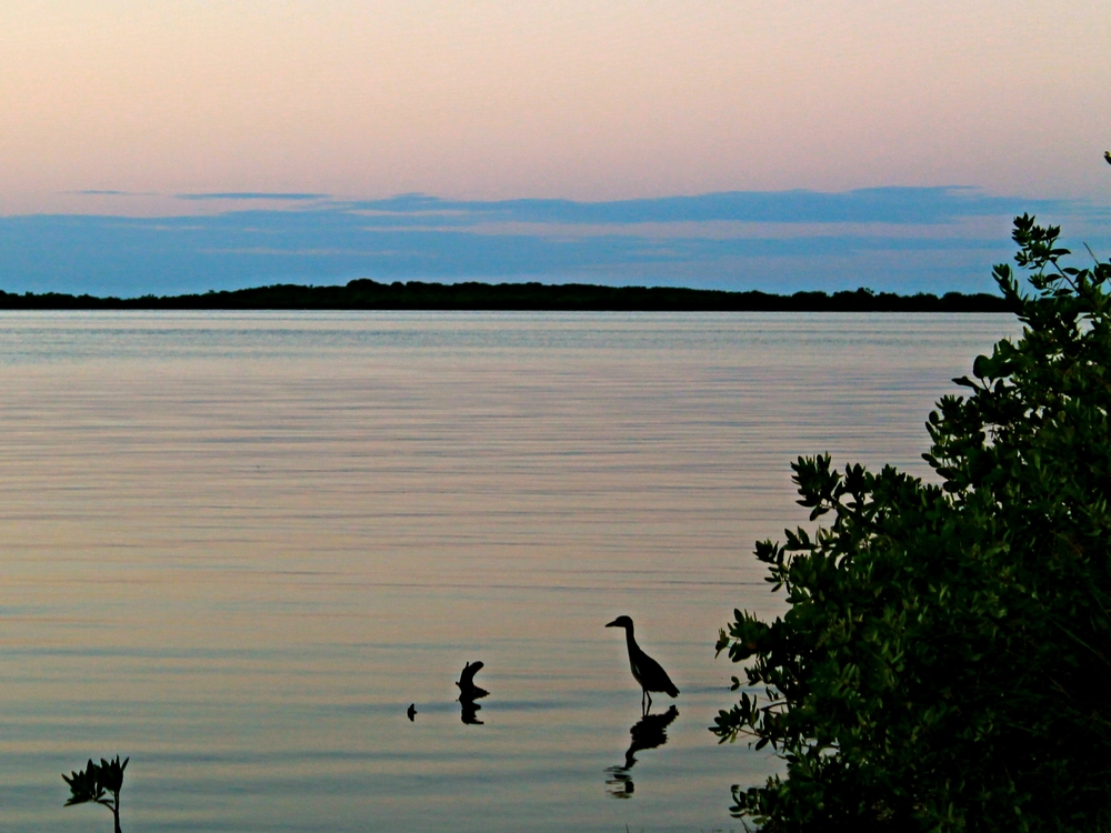 The placid Placencia Lagoon in a great place to spot birds, go kayaking, or fishing