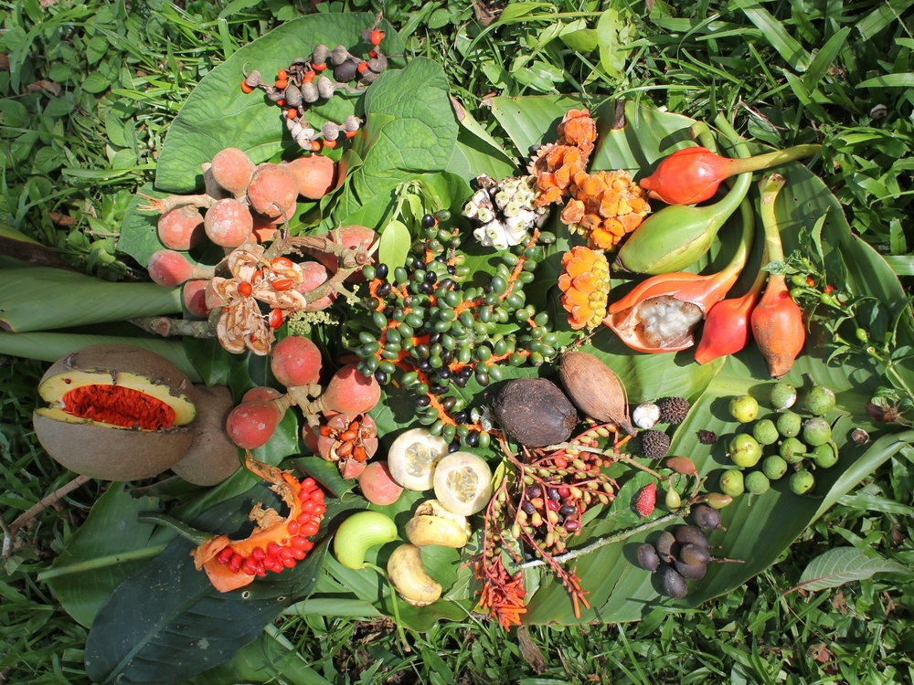 A cornucopia of forest products harvested from the jungle