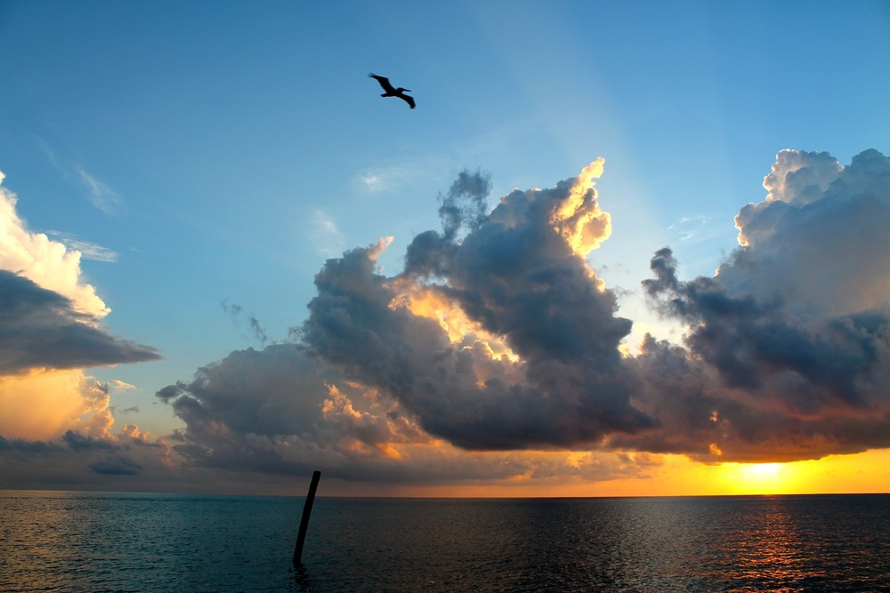 A Pelican enjoys a sunrise over the Caribbean Sea n front of Caye Caulker