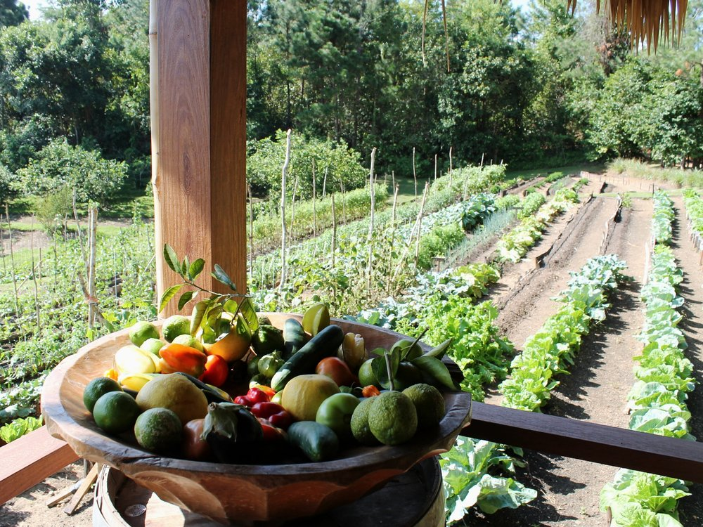 The Organic Gardens at Blancaneauxe Lodge