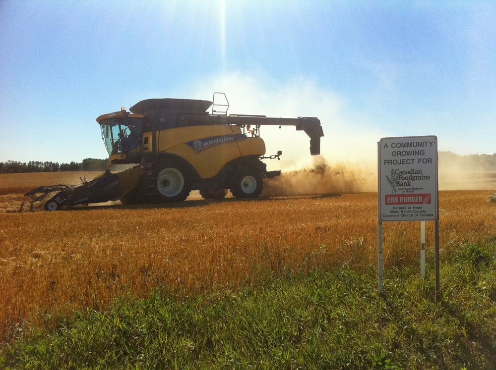 The VanBurgsteden's wheat harvest in Kinistino near Melfort, SK, 2013.