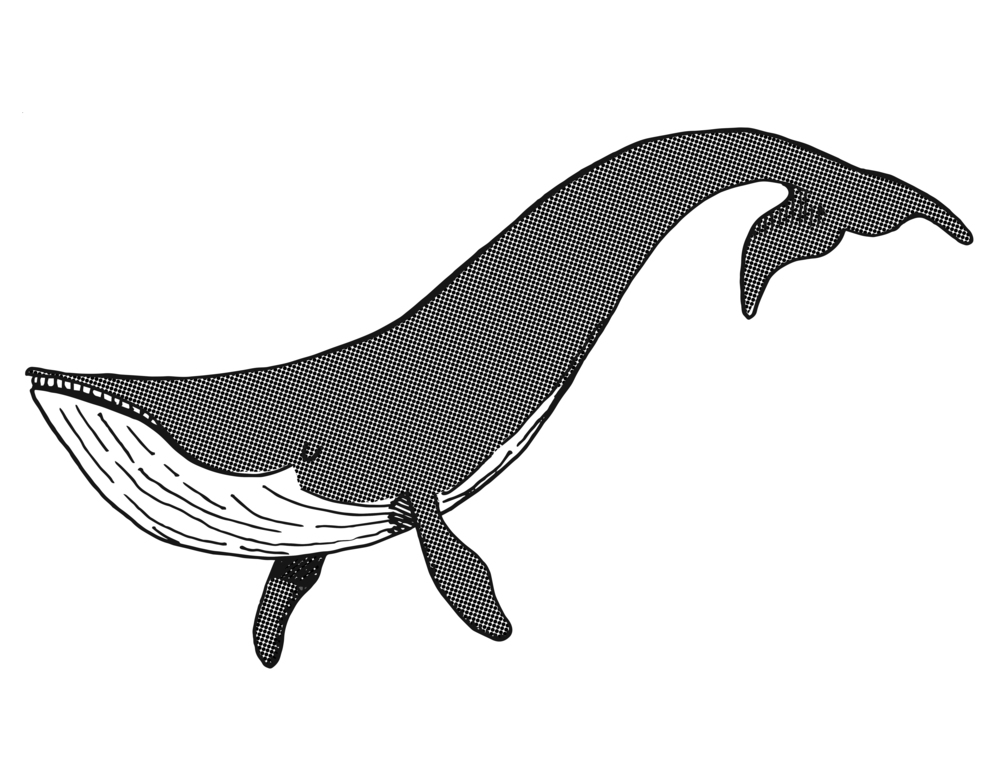greywhalestamp.jpg