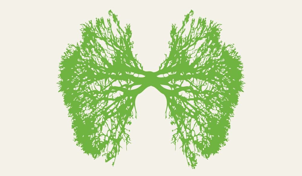 jkdc_greenteam-respiration.jpg