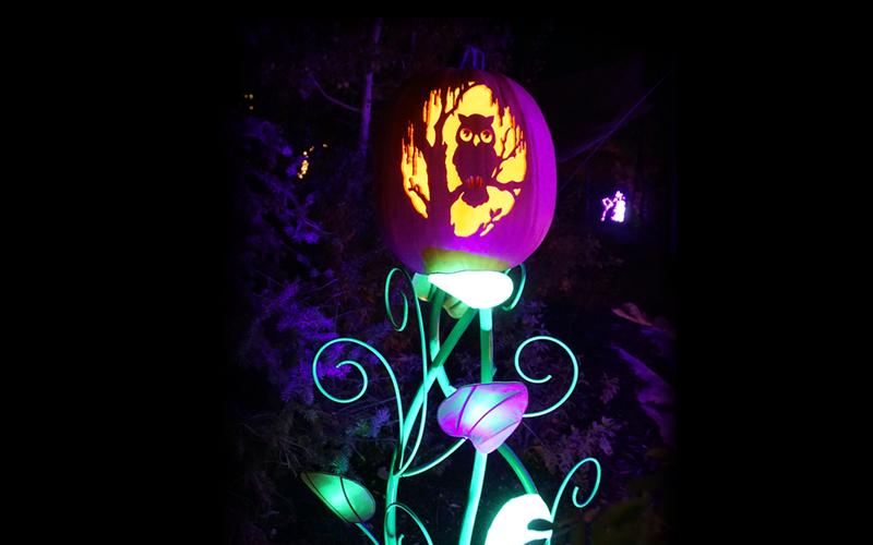Owl Pumpkin.png