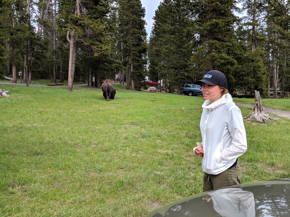 IMG_20180614_175034 - Kinsey and Bison  copy.jpg
