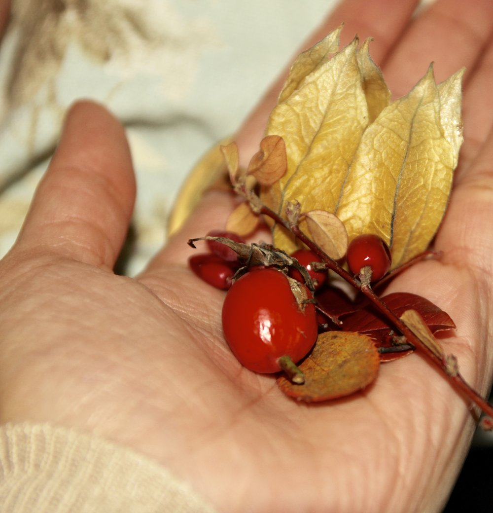 Rosehips and other berry specimens. Oslo 2017.