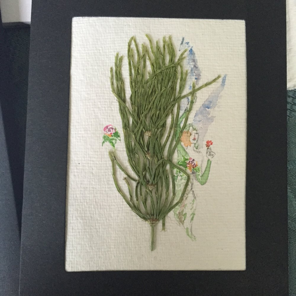 Horsetail (foraged in forest near Andalsnes, Norway)