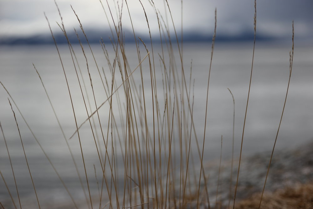 Grass before the sea.
