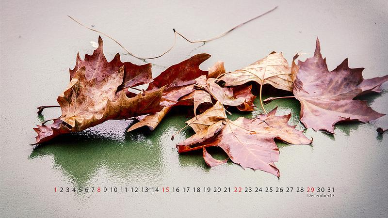 flickr.com/mlrs193