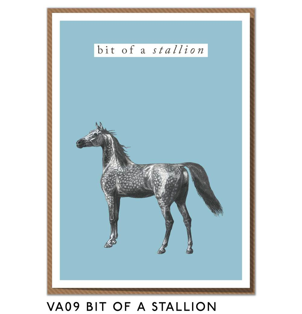 VA09-BIT-OF-A-STALLION.jpg