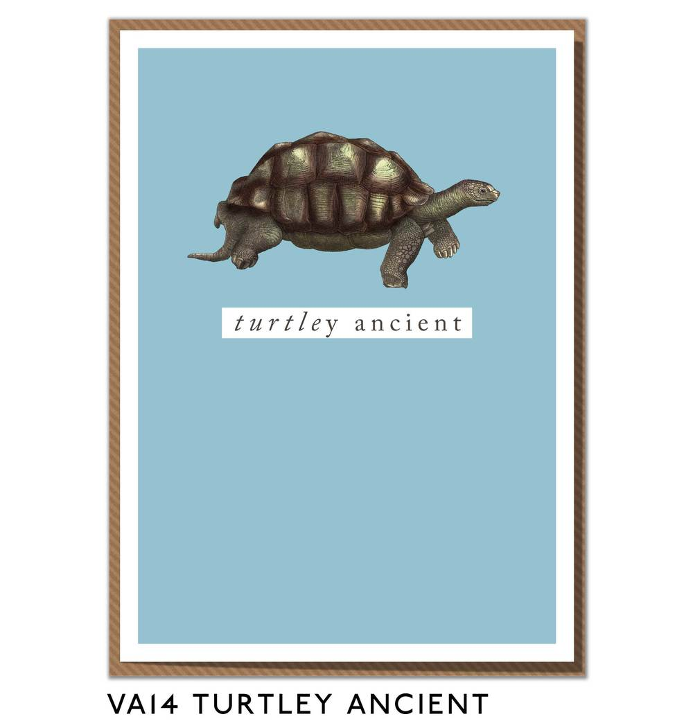 VA14-TURTLEY-ANCIENT.jpg