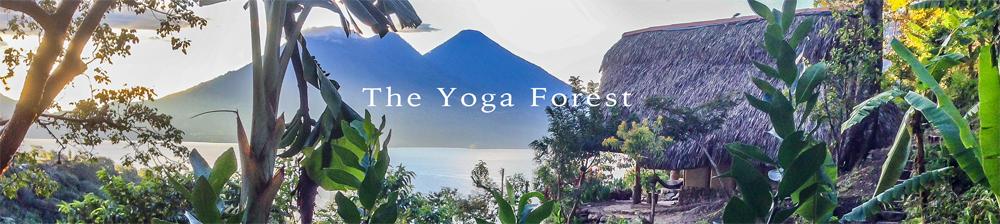 yogaforestbanner3.jpg
