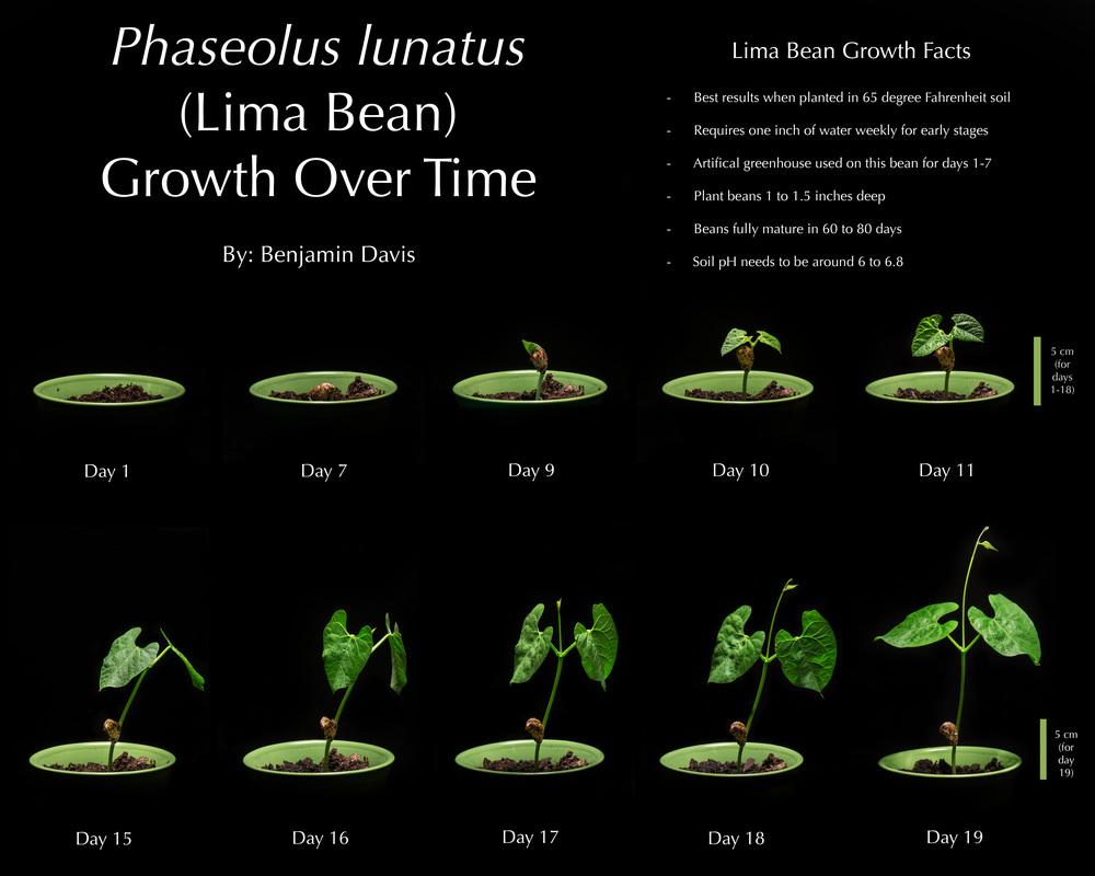 Plant Poster.jpg