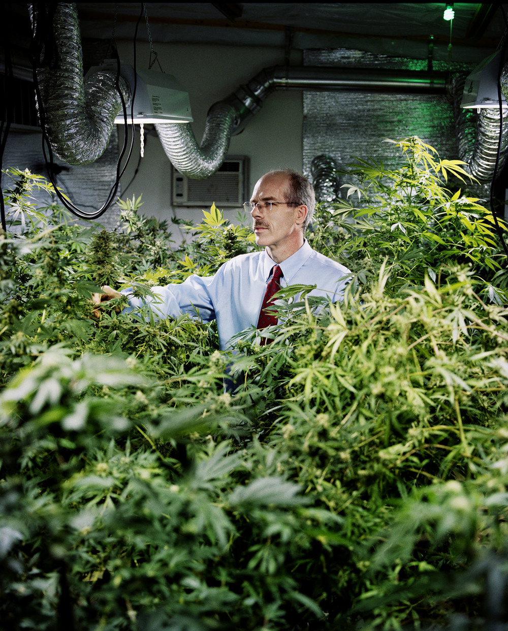 Andy Cookston, owner of Cannabis Medical Technology, in the grow room - Denver, CO