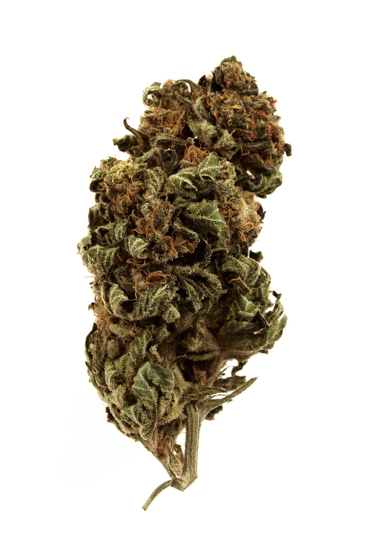 Time_Marijuana_G293_JRI_100912TIME_USMJ_SC7_0100_RGB.jpg