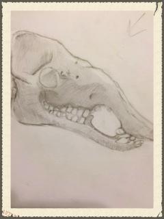 camel-skull.jpeg