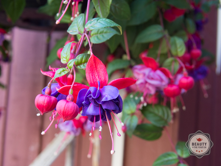 Different Fuchsias will produce different flavours so taste yours to find out if you like it.