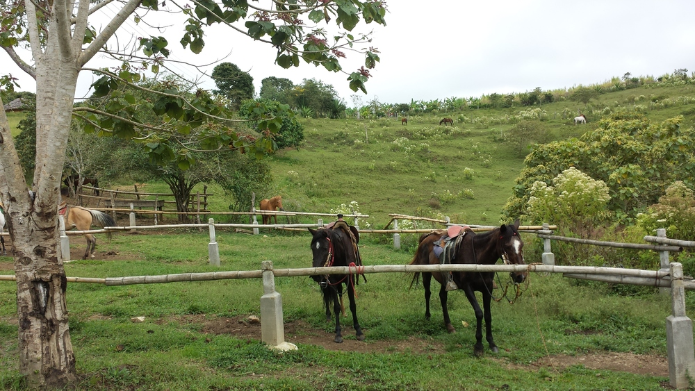 The horses. Colombia