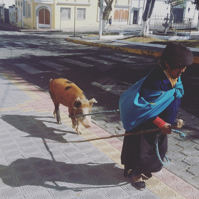 There's a possibility she was coming back from the market having just bought this pig. Her walk back up the hill is not for the feint of heart.