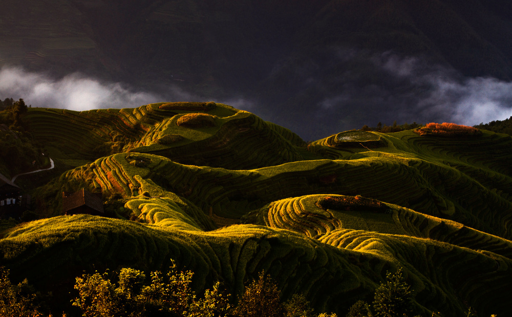 rice terraces.jpg