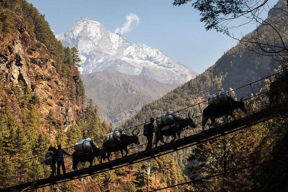 yak crossing