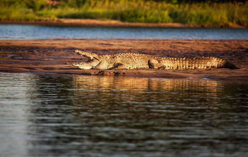 and crocs