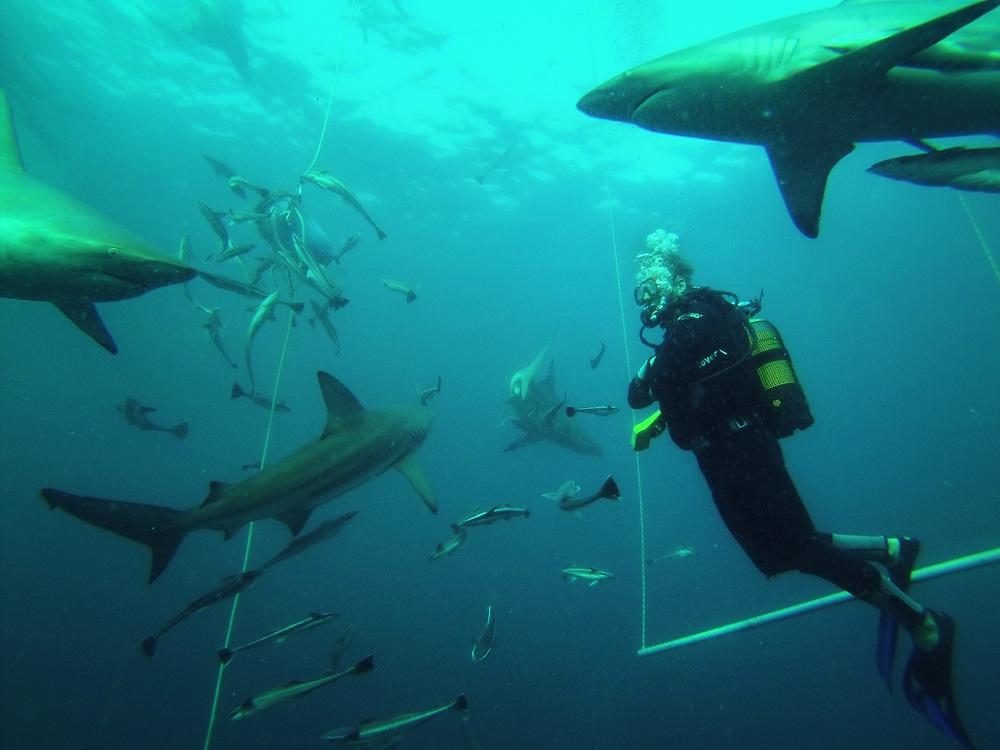diving.jpg
