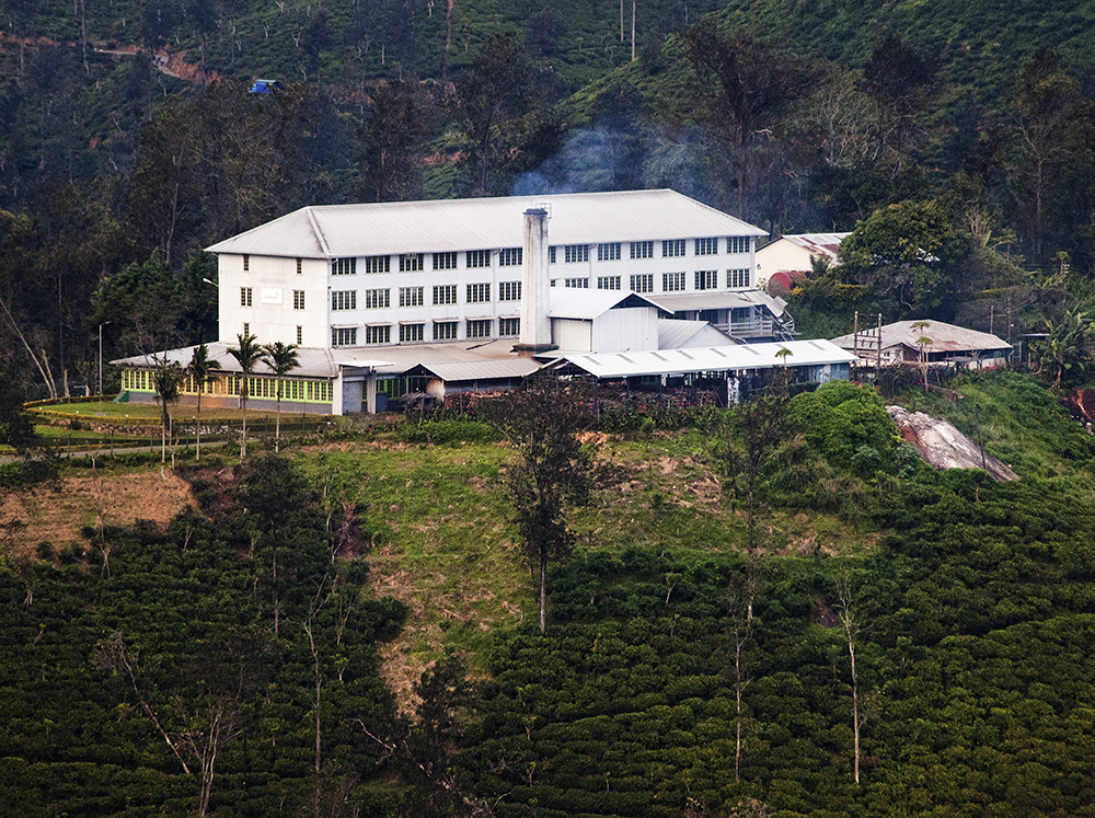 One of the tea plantations