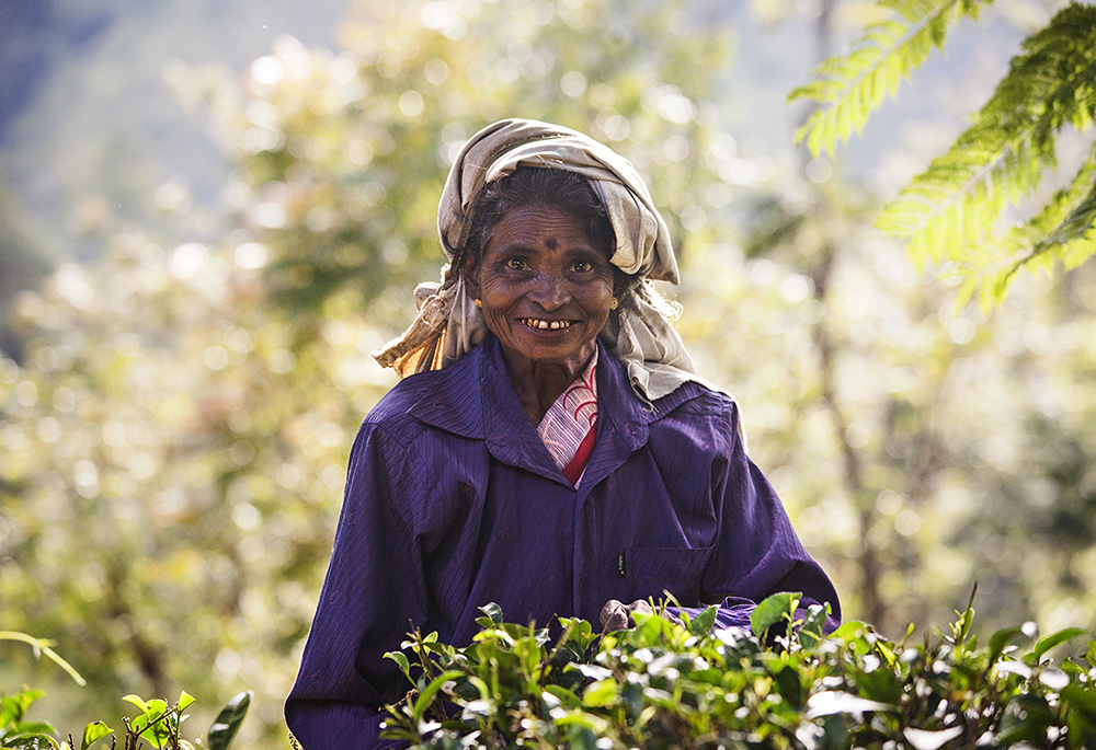 one of the tea pickers