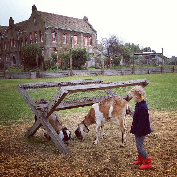 The Collingwood Childrens Farm