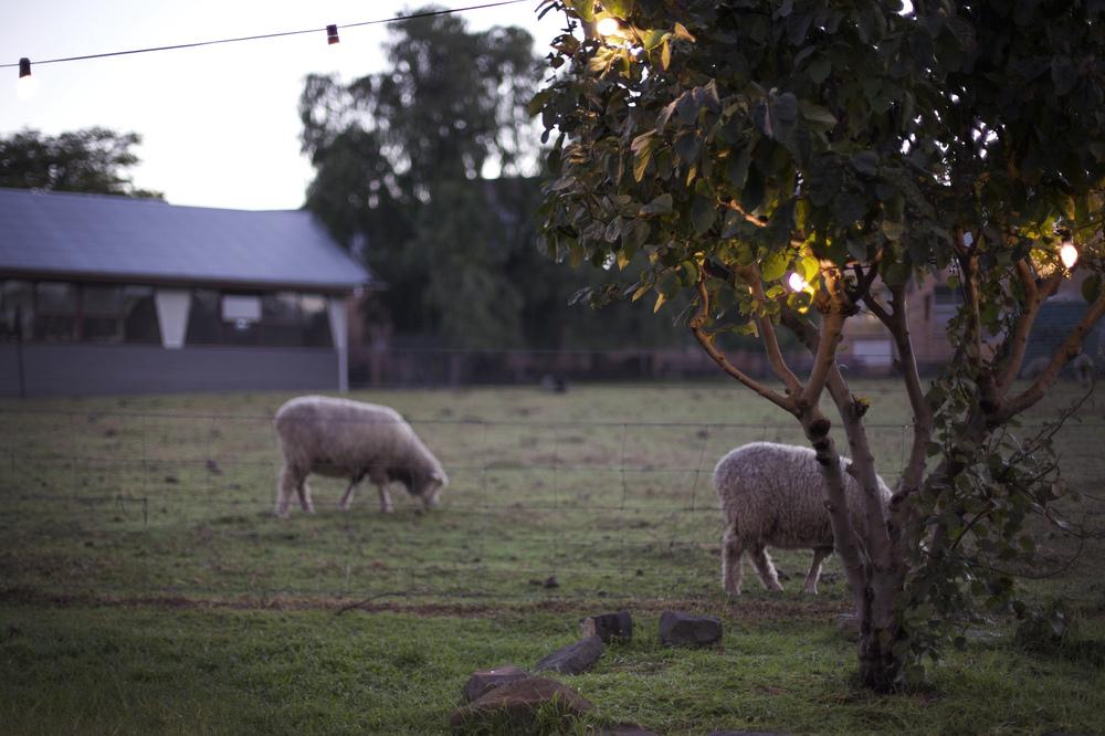 farm wedding melbourne 1 (1).jpg