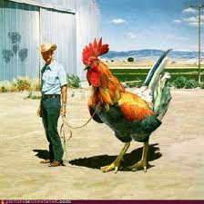chicken don't mess with nature.jpg