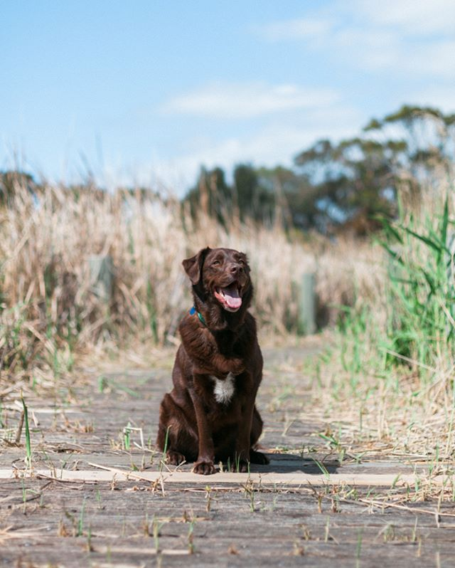 #furfamilyphotography #pet #portrait #petportrait #portraitphotographer #melbournephotographer #animalphotographer #petphotography #pet #doglife #lifestylephotographer