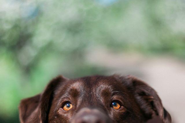 HUGO #furfamilyphotography #pet #portrait #petportrait #portraitphotographer #melbournephotographer #animalphotographer #petphotography #pet #doglife #lifestylephotographer #dogphotography #petphotographer