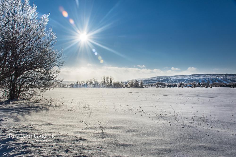 winter sun over the meadow - Osler Bluff