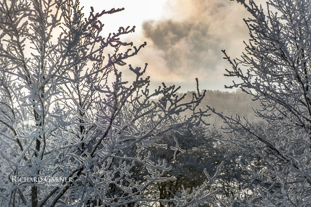 -20131223_DSC6717 Swiss Meadoes snow on trees.jpg