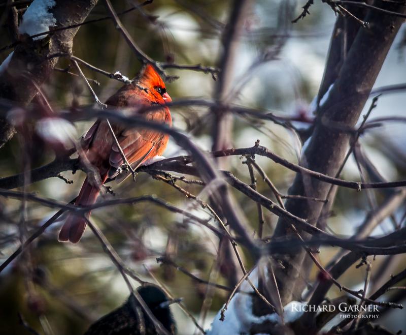 cardinal Jan 1-1.jpg