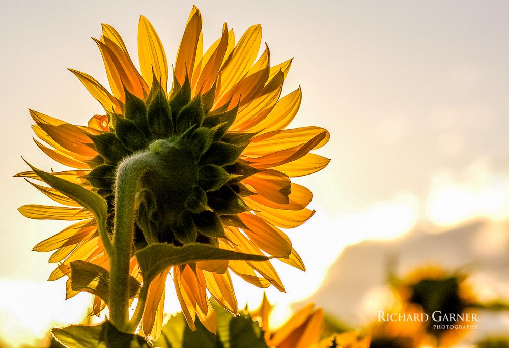 spring flowers-1-2.jpg