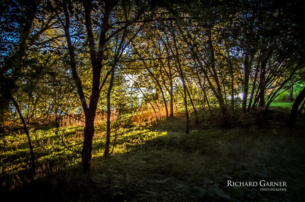sunrise light through the trees @ Harbourview Park