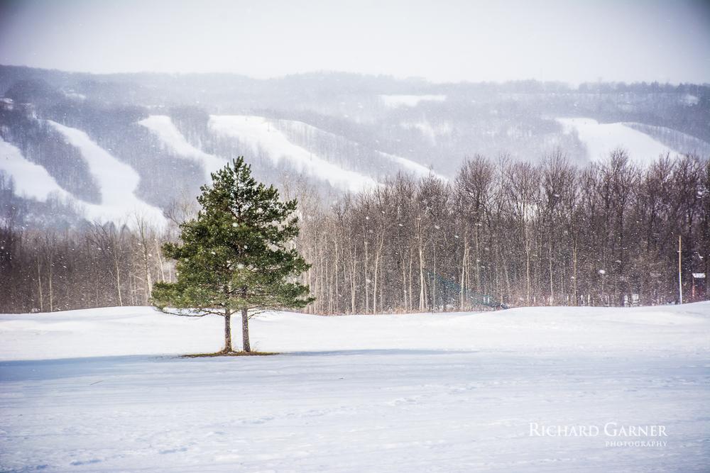 blue mountain snowfall (1 of 1)2014-01-15.jpg