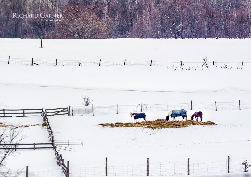 horse farm winter -1 _RGP9292.jpg