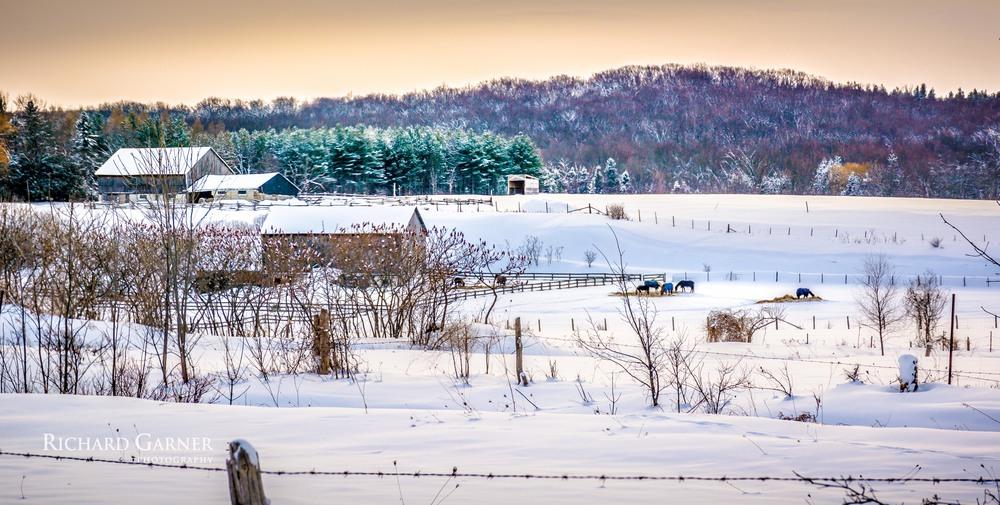 horse farm 6th st. 20140122.jpg