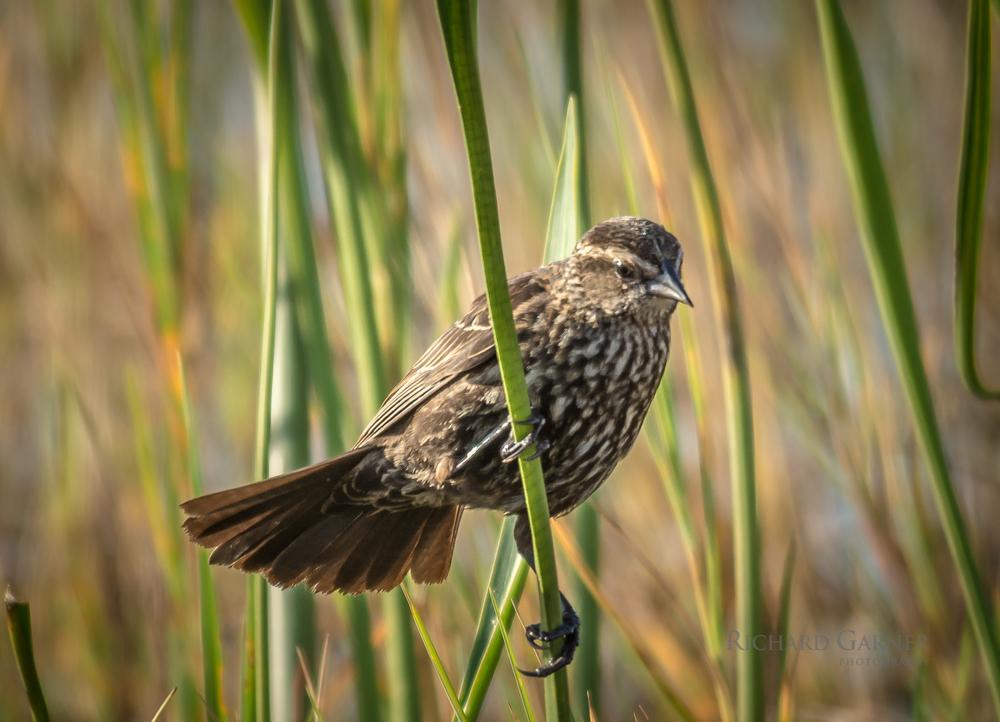 sparrow-140416-6000 x 4000.jpg
